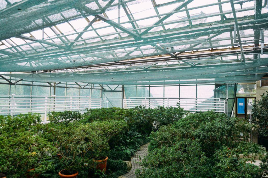 Фотосессия в оранжерее ботанического сада