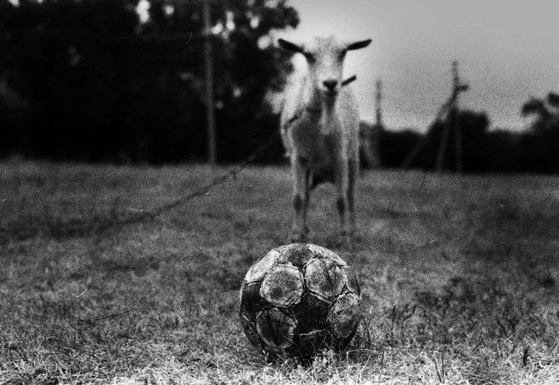 мяч коза черно-белая фотография