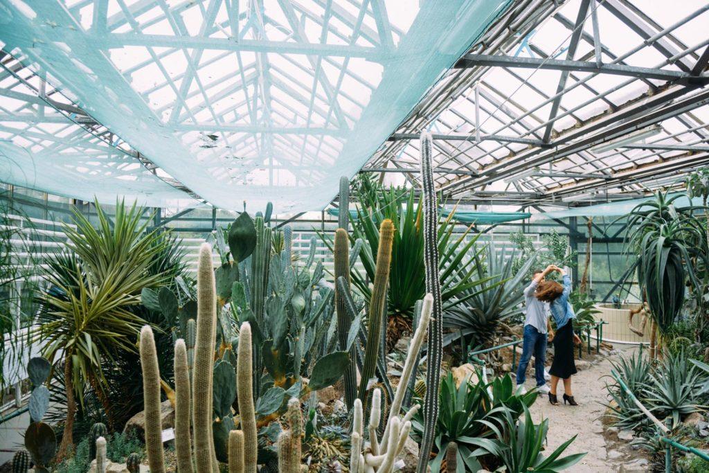 Фотосессия оранжерея киев кактусы фото
