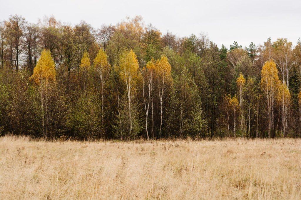Природа Черниговской области