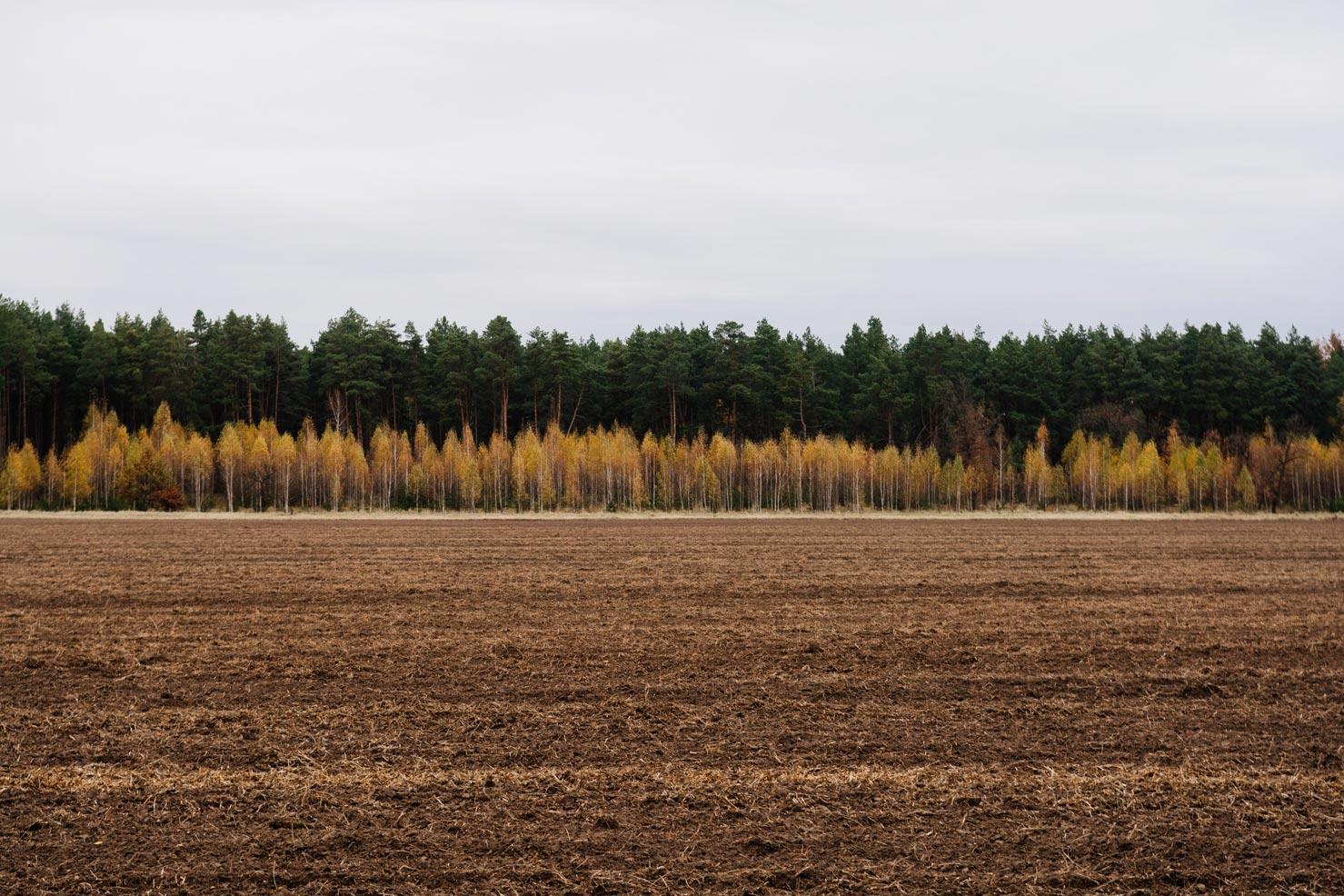 Лес Черниговская область